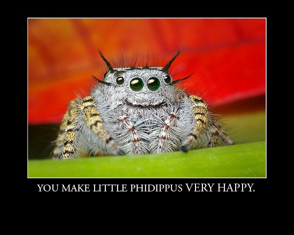 PhidippusHappy.jpg